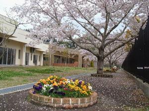 庭:四季の植物が楽しめ、特に春先はたくさんのさくらが迎えてくれます。