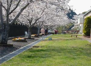 散歩:天気がよい日には四季を感じながら苑庭にて散歩も楽しめます。